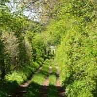Eidertal Waldweg